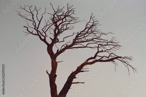 Fotografia, Obraz  tree with branches against the sky shaped brain