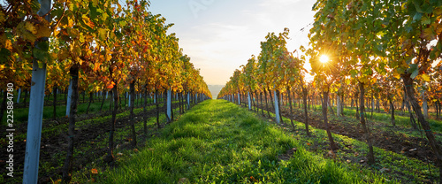 Photo sur Toile Vignoble Autumn vineyards with colorful leaves and sunbeams