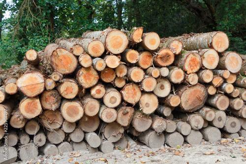 Fotografia, Obraz  Empilement de rondins de bois en forêt