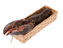 Fresh Raw Lobster On Basket Isolated On White Background