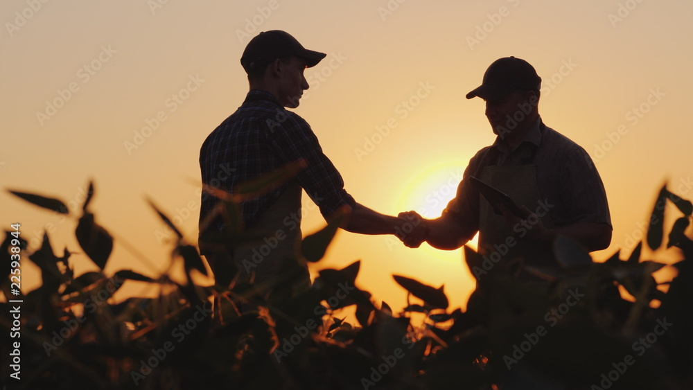 Fototapety, obrazy: Two farmers talk on the field, then shake hands. Use a tablet