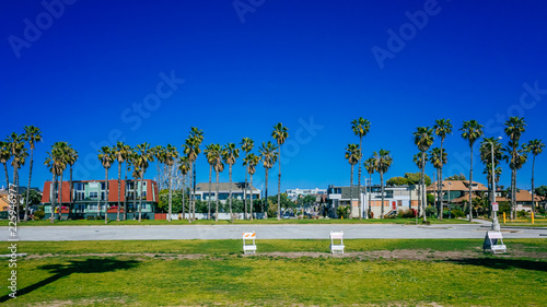 Fotografie, Obraz  Houses and palm trees near Venice Beach, Los Angeles