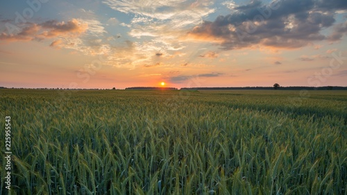 Foto auf Leinwand Lachs Beautiful sunset sky over ceral field in calm rural landscape