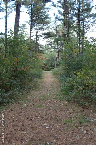 Foto op Canvas Weg in bos forest path and sunlight
