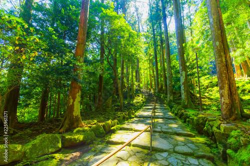 Stampa su Tela  那智勝浦の自然風景