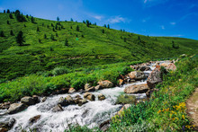 Mountain Creek In Green Valley Among Rich Vegetation Of Highland In Sunny Day. Fast Water Flow Among Vivid Greenery And Trees Under Blue Clear Sky. Amazing Mountain Landscape Of Majestic Altai Nature.
