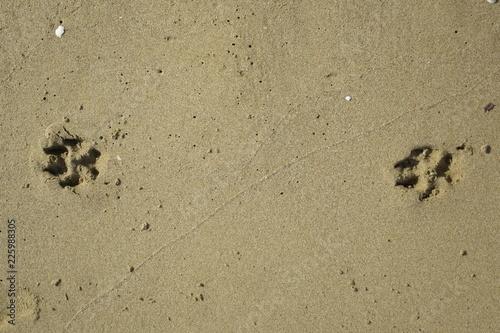 Fotografija  impronta di animale cane sulla sabbia