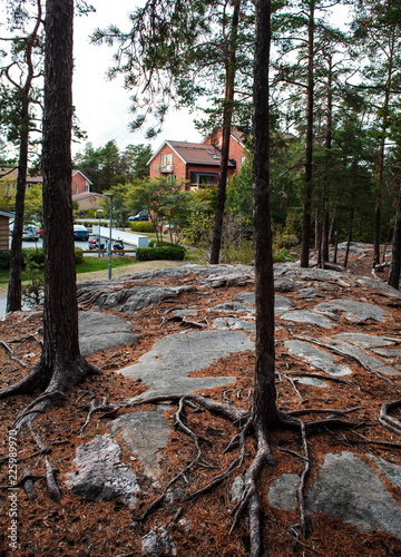 Photo  Stockholm,Lidingo natural landscape
