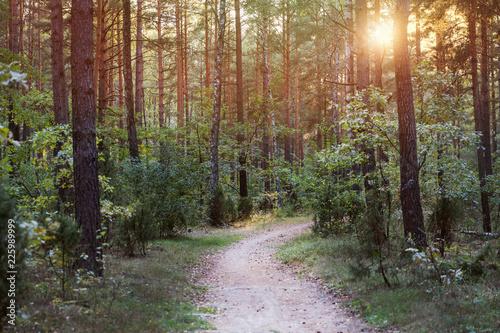 Stickers pour portes Route dans la forêt Path through the forest