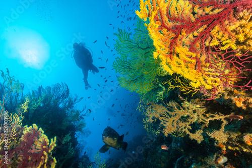 Fotografie, Obraz  paysage plongeur et mérou