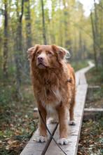 Happy Dog On Hiking Trail In F...