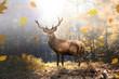 canvas print picture - Stolzer Hirsch im herbstlichen Wald bei Lichteinfall