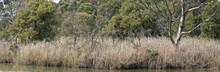 Cleland National Park