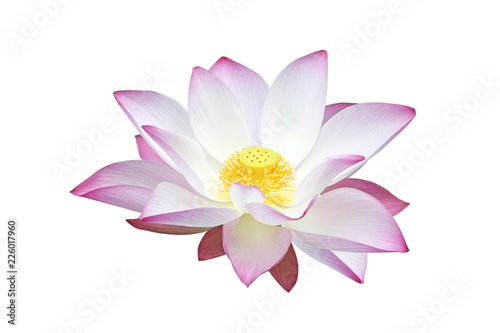 Fotografía  Pink water lily flower (lotus) isolated on white background