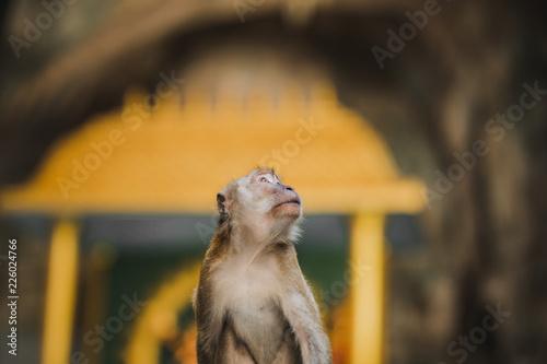 Foto op Canvas Aap Affe auf Felsen, Höhle