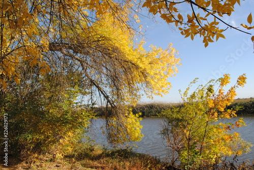 Fototapety, obrazy: Осень