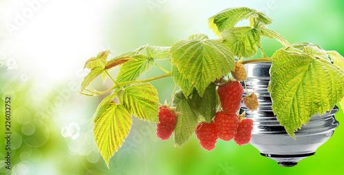 Staande foto Lente gardening raspberries garden on green energy