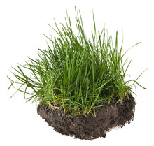 Green Grass In The Ground Isolated On White Background