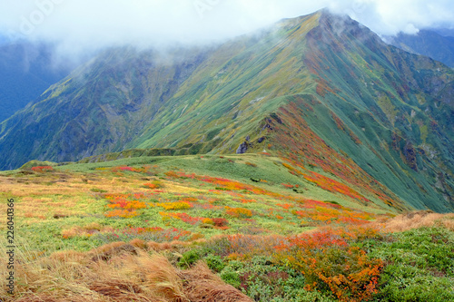Fotobehang Olijf 谷川岳主脈稜線の紅葉とオジカ沢の頭