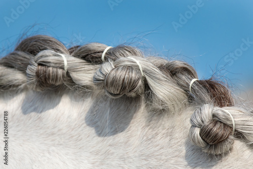 Fotografía Neck of dressage horse with braided mane: pigtails, bumps on the mane close-up