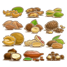 Vector Set Of Nuts, 12 Cut Out...