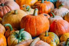 Harvest Of Pumpkins