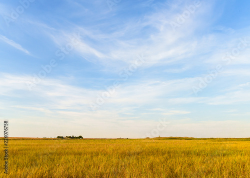 Fotobehang Platteland Agricultural landscape. Blue sky, meadow, crop field and farmhouse in the distance