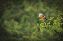 Robin Bird On A Tree Branch An...