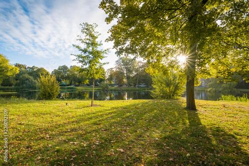 Die Sonne scheint durch einen Baum im Herbst Canvas Print