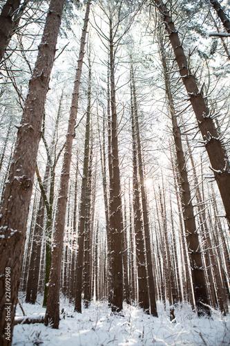 Fotografie, Obraz  Winter Trees 24