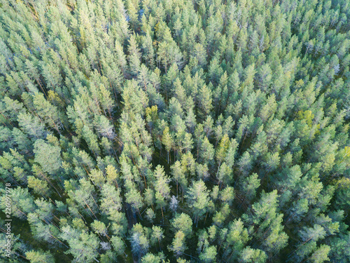 Fotobehang Bossen Aerial view of a green forest. Beautiful landscape. Clouds over the green forest. Aerial bird's eye trees. Aerial top view forest. Texture of forest view from above.