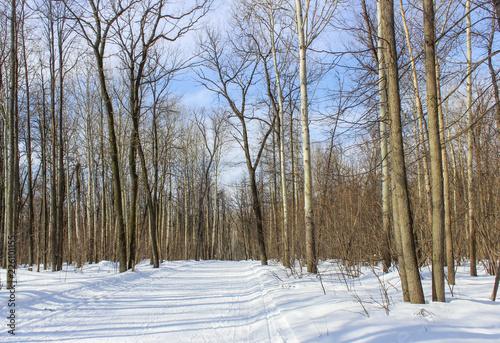 Deurstickers Berkbosje March forest