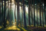 Fototapeta Landscape - Sonnenstrahlen im Wald am Morgen im Herbst