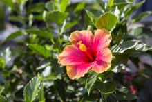 Pink And Orange Wildflower