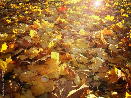 Photo Пылающие листья.