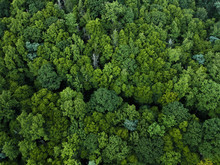 Aerial View Of Trees Growing In Pisgah National Forest