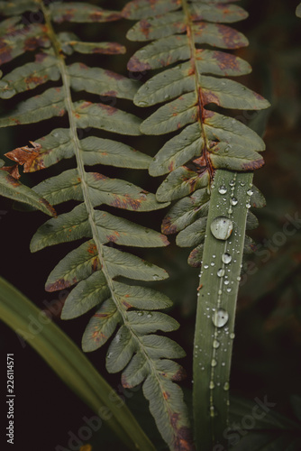 Foto op Canvas Planten High angle view of plants growing in forest