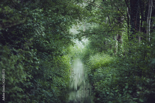 Scenic view of stream amidst plants and trees in forest