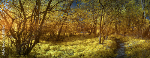 Panoramic view of trees in forest during autumn