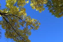 Blue Sky Peeking Through Autumn Foilage
