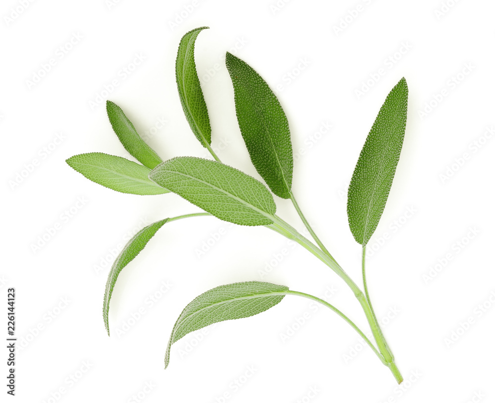 Fototapety, obrazy: sage leaf isolated on white background, top view, flat lay