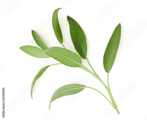 sage leaf isolated on white background, top view, flat lay