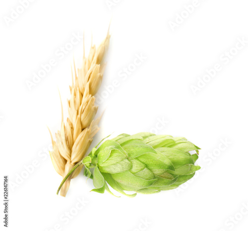 Fresh green hop and wheat spike on white background. Beer production