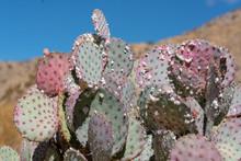 Green Cactus On Blue Sky