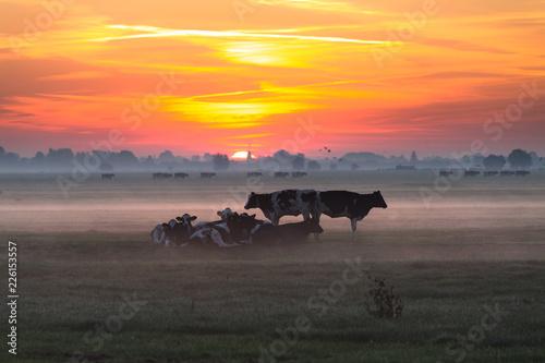 Fototapeten Natur Koeien in de ochtend zon in een weidse polder