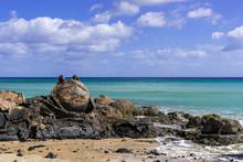 Stein Frosch Felsenküste Meer