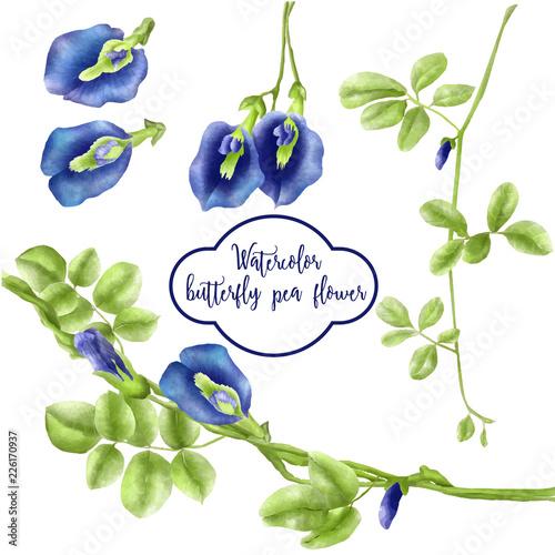 watercolor set of butterfly pea flower Fototapete