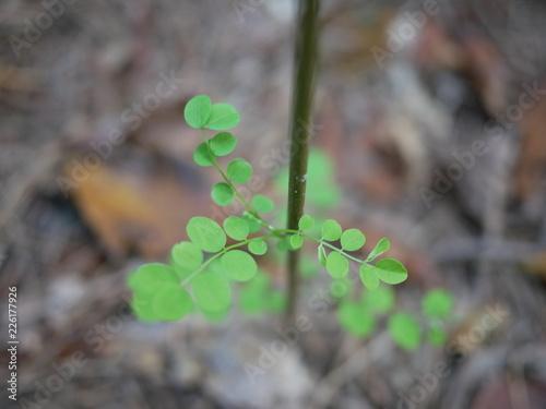 Fotografie, Obraz  둥근 잎을 가진 녹색 식물