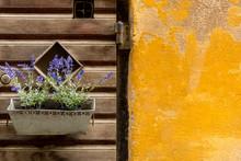 Wooden Window Shutters And Purple Decorative Flowers