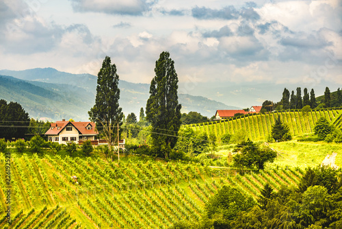 Tuinposter Wijngaard Austria, Slovenia Vineyards Sulztal area south Styria , wine country path to heart shaped street tourist spot